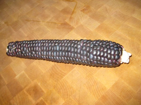 Hopi Blue Corn