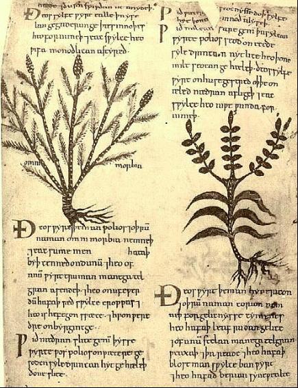 Found in the 10th century Lacnunga Manuscript