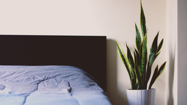 Bed with plant